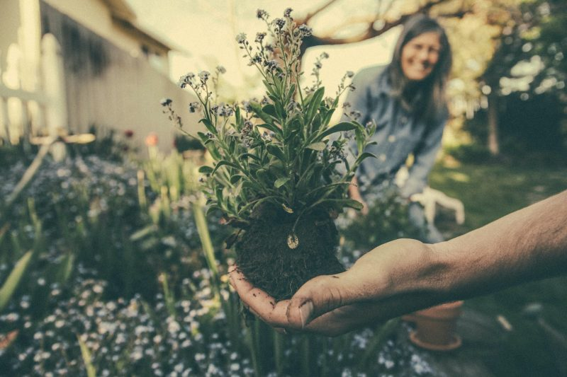 Gardening for mental health